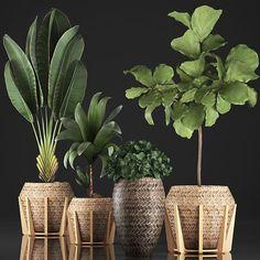 House Plants Decor, Plant Decor, Garden Plants, Indoor Plants, Exotic Plants, Tropical Plants, Decoration Plante, Pot Plante, Backyard Garden Design