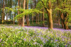 Beautiful ireland landscapes landscape photography for Garden design ideas northern ireland