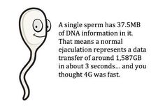 A single sperm has 37.5MB of DNA in it...