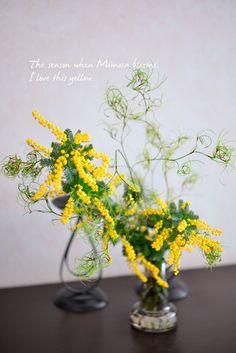 ミモザ - Mimosa