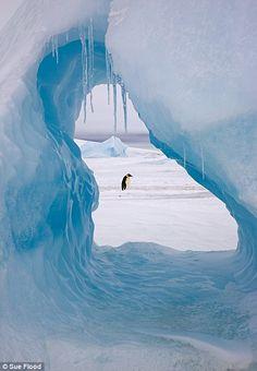 Snow Hill Island, Antarctica  | ... in iceberg at Snow Hill Island rookery, Antarctica. November 2008