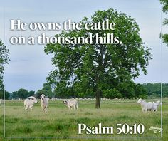 He owns the cattle on a thousand hills. Psalm 50:10 Livestock motivation by Ranch House Designs. #livestockmotivation #stockshowlife #showtowin
