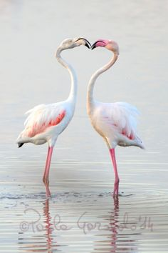 Pink and white by Paola Garofalo ~ Flamingos, Sicily.