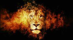 PARTAGE OF EVOLVEFEST...........ON FACEBOOK........