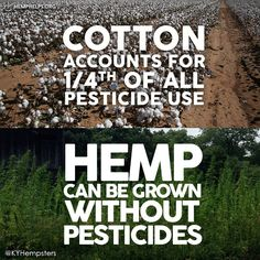 Well all plants can & should be grown without chemicals. But its much easier for #Hemp because the plants are grown closely together. This helps the Hemp field out compete anything that might need chemicals. Make Hemp Part of Your Everyday.  Each Hemp Shirt Plants 11 #Trees:  Much love to Kentucky Hempsters for the amazing Hemp field picture!