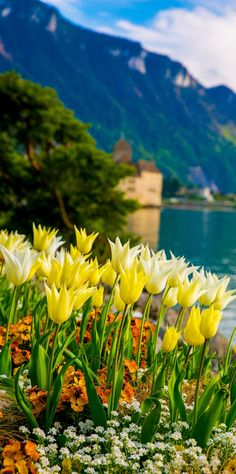 Flowers on Lake Geneva, with Swiss Alps, Montreux, Switzerland (Europe travel, vacation), Chillon Castle