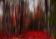 magic forest by Arman Ayva on 500px