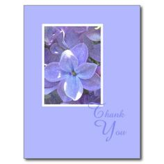 Lilacs Sympathy or Death Thank You Postcard This site is will advise you where to buyHow to          Lilacs Sympathy or Death Thank You Postcard Online Secure Check out Quick and Easy...