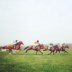 Let's race. #photography #fauna #equine #equestrian #horseracing