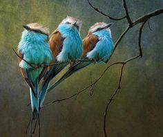 Beautiful Birds -