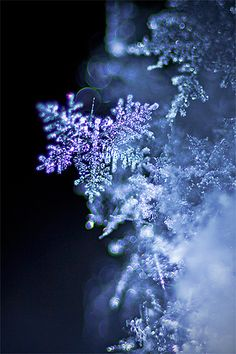 snow flake..