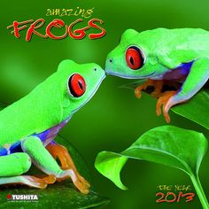 Amazing Frogs Wall Calendar: This new wall calendar for 2013 features a dozen beautiful photographic nature shots of exotic frogs. Days and months are printed in English, German, Spanish, Italian, and French.  http://www.calendars.com/Reptiles-and-Frogs/Amazing-Frogs-2013-Wall-Calendar/prod201300006624/?categoryId=cat420002=cat420002# - I'd love to see these two frogs quilled!