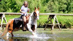 Equirencontre Bertrix 2016 – Fédération Francophone d'Equitation asbl - Equirencontre Father, Horses, Animals, Pai, Animales, Animaux, Animal, Animais, Horse
