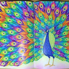"""""""""""Magnificent Peacock"""" : Tropical Wonderland : Millie Marotta : Prismacolor Premier pencils, Stabilo power pens, Mungyo soft pastels #milliemarotta…"""""""