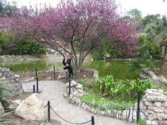 Tea Japanese garden in San Antonio