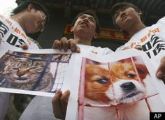 Chinese Dog Eating Festival Banned (ANIMAL ACTIVISM) CHINA — Have you ever wondered if your Facebook or Twitter posts make an impact? China recently baned a 600-year-old dog eating festival after pictures of the practice found their way onto the internet. Eating cats and dogs is still socially acceptable in China, but the new ban is challenging this practice countrywide. So animal advocates, keep writing. You never know who is listening.— Global Animal Huffington Post A ...