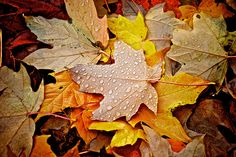 Autumn leaves on the ground | Flickr - Photo Sharing!