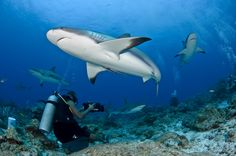 Honduras has world-class diving for every budget. Maldives Tour, Visit Maldives, Maldives Resort, Maldives Travel, Cozumel Scuba Diving, Shark Diving, Scuba Travel, Honduras Travel, Under The Ocean