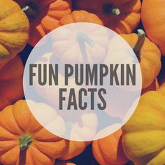 Fun Pumpkin Facts • SwagGrabber Halloween Facts, Holidays Halloween, Fall Pumpkins, Halloween Pumpkins, The Pumpkin Eater, Pumpkin Facts, Fall Facts, Pumpkin Family, Family Fun Games
