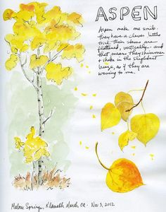 37 Ideas Quaking Aspen Tree Tattoo For 2019 Tree Drawing For Kids, Paper Tree Classroom, Leaves Sketch, Palm Tree Decorations, Harry Potter Christmas Tree, Willow Tree Tattoos, Aspen Trees, Aspen Leaf, Tree Sketches