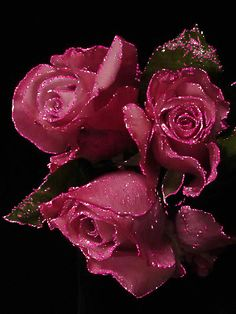 GIF New World - Flower GIF - Community - Google+