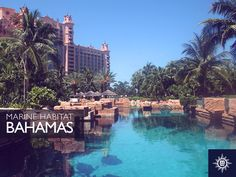 Travel to the Bahamas year round with #MSCDivina and visit the Marine Habitat in Atlantis, one of the largest outdoor aquariums in the world. Otputujte na Bahame s brodom #MSCDivina i posjetite Marine Habitat u Atlantisu, jedan do najvećih vanjskih akvarija na svijetu.
