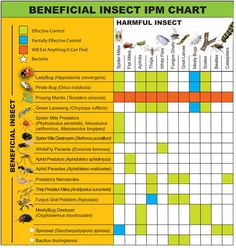 Beneficial versus harmful insect chart - via Atlantis Hydroponics http://www.atlantishydroponics.com/company/default/assets/Image/bugs.jpg