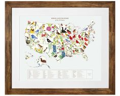 BIRDS AND BLOOMS ART - U.S. MAP | geography, state bird, state flower, wall art | UncommonGoods