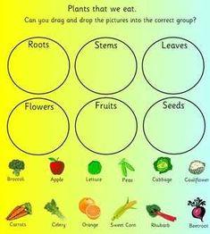 plants we eat worksheet worksheets may school plants parts of a plant first grade. Black Bedroom Furniture Sets. Home Design Ideas