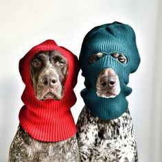 Are these the best Costumes you could find? Dogs playing dress up are the best