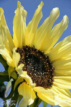 The Flower Fields, Carlsbad, CA.