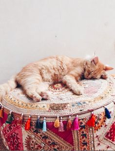 Boho cat:)