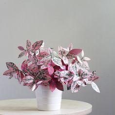 plante en papier 7
