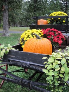 Orange pumpkins with yellow and red mums in a black vintage wagon.  What a lovely autumn display!