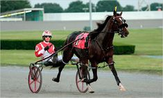 harness racing | Harness Racing Driver Jason Bartlett Will Take On the World