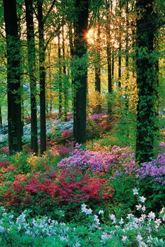 Flower forest Poster - EuroPosters