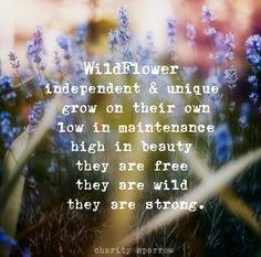 wildflower poem charity sparrow