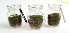 10 Mini Moss Terrarium Favors // Pick Your Habitants // Pick your Flag Tag Text + Color // Wedding or Party // Hand-Crafted Green Wedding, Wedding Colors, Wedding Styles, Moss Terrarium, Terrariums, Boho Green, Woodland Forest, Wedding Vendors, Weddings