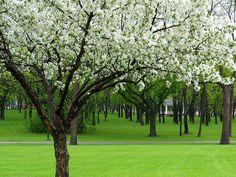 Island Park Gazebo, spring (Fargo, North Dakota)