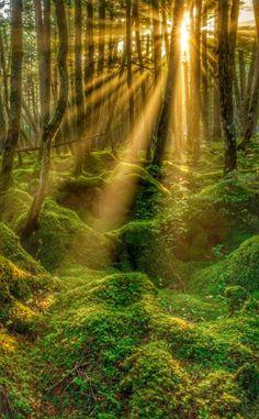 Beautiful Landscape Pictures, Beautiful Landscapes, Forest Landscape, Fantasy Landscape, Mystical Forest, Autumn Forest, Green Nature, Nature Scenes, Natural Wonders