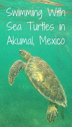 Ever swam with sea turtles? Find out where to go to get up close and personal with these elusive creatures!