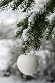 white ornament on green pines I Love Winter, Winter Colors, Winter Day, Winter Is Coming, Winter Season, Green Christmas, Winter Christmas, Christmas Bulbs, Natural Christmas