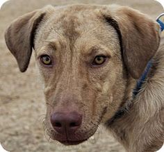 Vancouver, BC - Husky/Plott Hound Mix. Meet Jenny, a dog for adoption. http://www.adoptapet.com/pet/17577828-vancouver-british-columbia-husky-mix