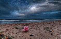 Washed away...  #flower #beach #Chicago #sky
