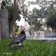 NoEresDeEldaSiNo (@NoEresDEldaSiNo) | Twitter