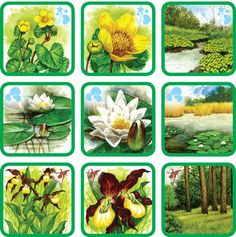 kvety Pond Life, Forest Theme, Diy Toys, Science And Nature, Flower Crafts, Trees To Plant, Montessori, Board Games, Preschool