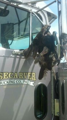 My Truck Driver .. Well... sorry about that .... what drivers encounter can you tell what it is ?