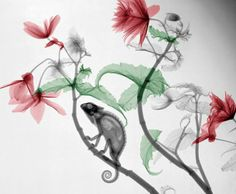 Gorgeous, Digitally Manipulated X-Ray Photographs of Animals and Flowers