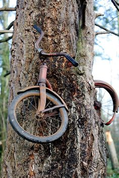 Bicycle in tree, Vashon Island, Washington