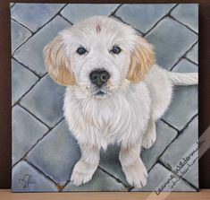 1000+ images about Dog Art on Pinterest | Dog art, Maltese and Golden ...
